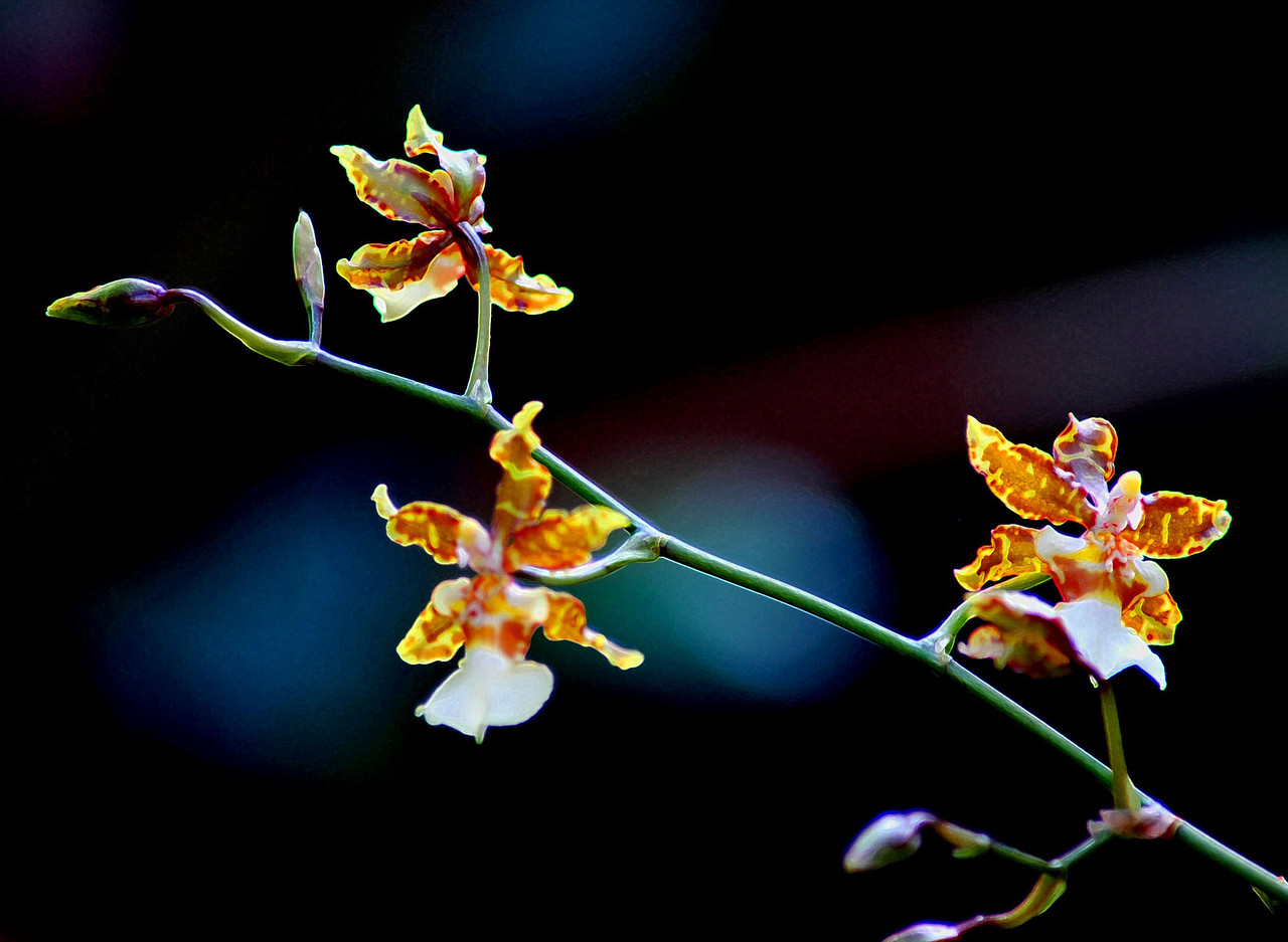 A KIND OF ORCHID