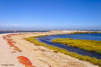 Bolsa Chica Ecological Reserve, CA