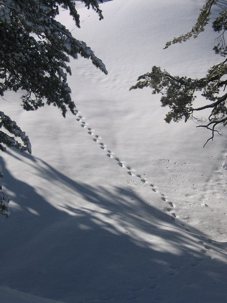 On the way to Pear Lake Hut in Kings Sequoia National Park (Easter of 2006).  Black Bear Prints in the snow.