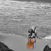 Beach Boy_TOC