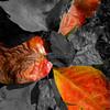 Fallen Leaves_TOC