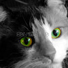 Cat_TOC