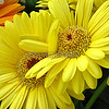 Floral Hug
