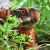 Turtle (Photo taken in Millersville, Maryland)