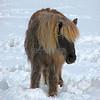 Wooly Snow Pony