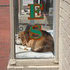 How much is that doggy in the window? (photo taken in Annapolis, Maryland).