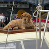 First mate on a sailboat docked in Annapolis. Maryland.