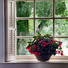 Window Flowers at Grace Church, Yorktown, Va.