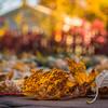 324/366 - Fallen Leaves