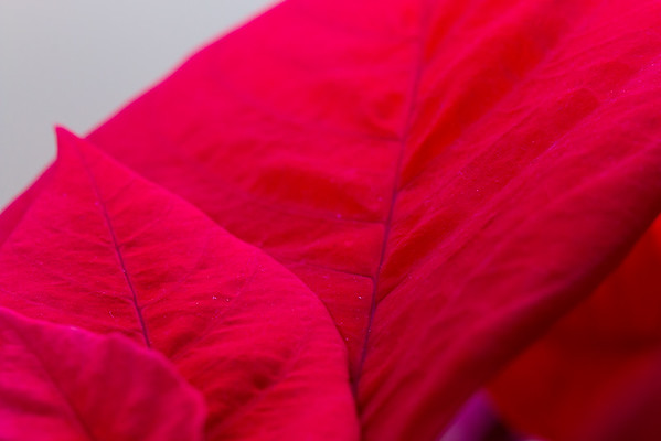 36/366 - Silky Soft