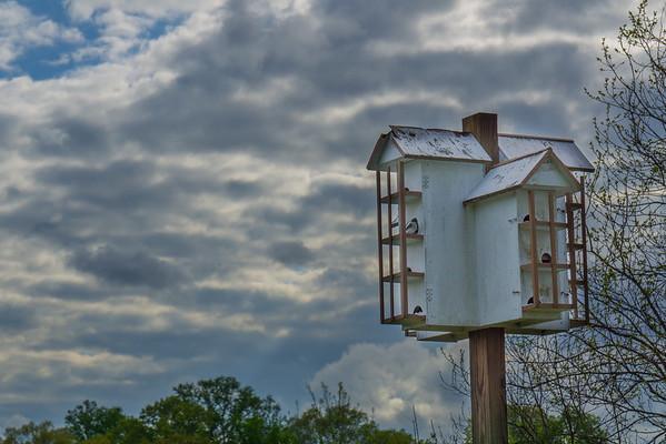 148/366 - Bird House