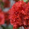 126/366 - Bloom