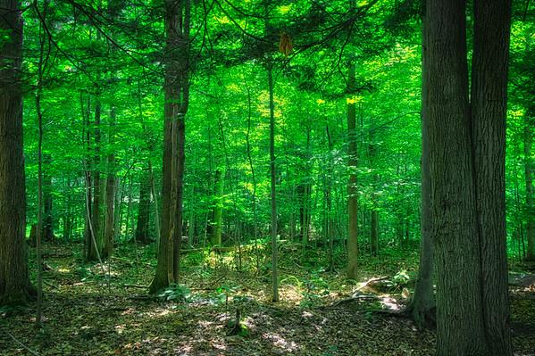 197/366 - Sleepy Forest