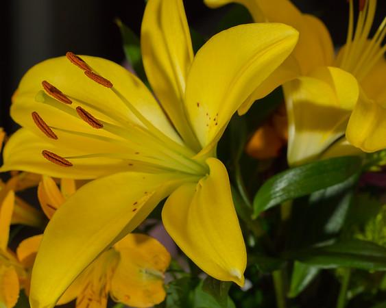 138/366 - Yellow