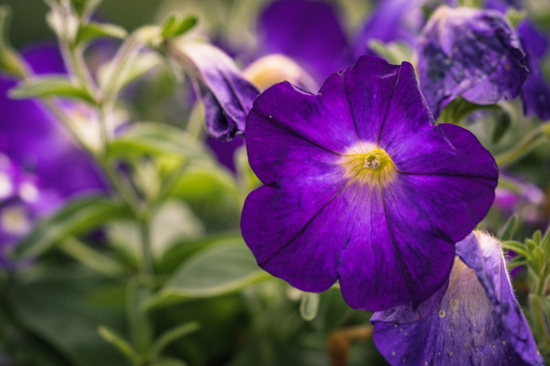 Flower - Macro | Nature | Pieces