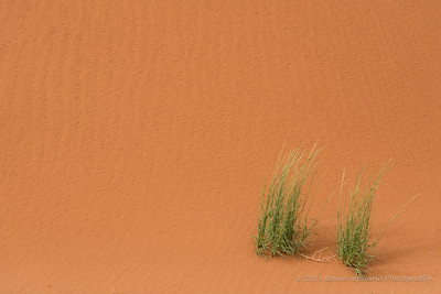 2013-09-10-Dunes-0028