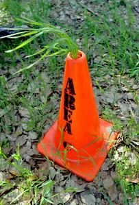 Grass and cone