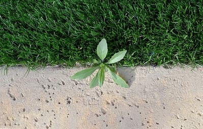 Astroturfed weed