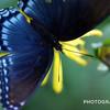 Self-Propelled Flower