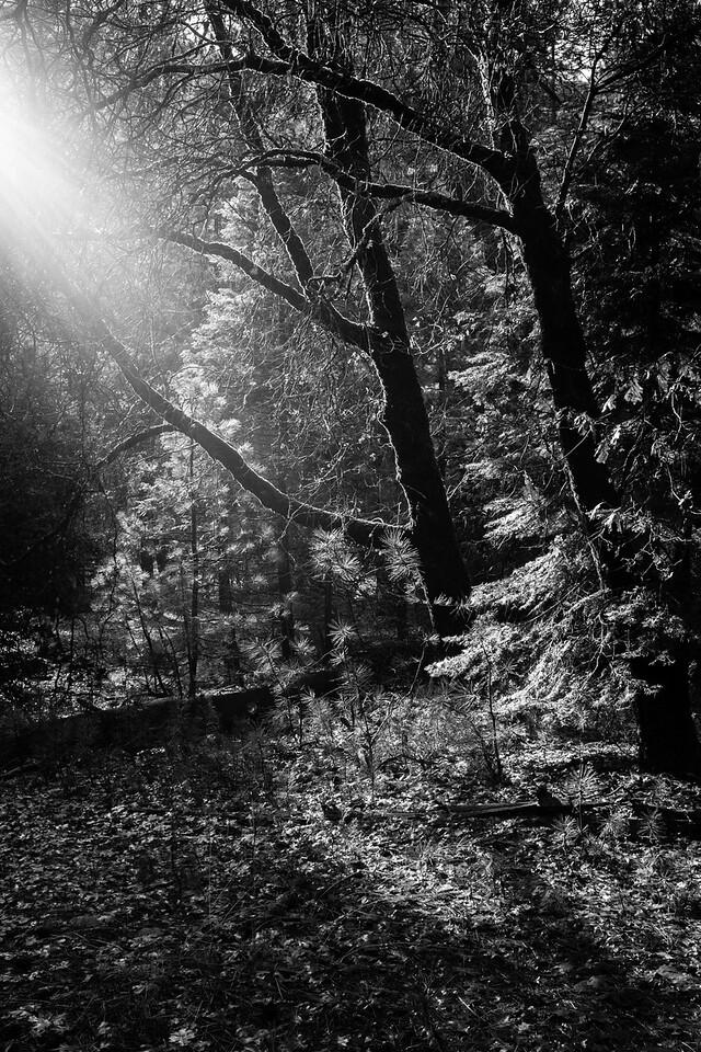 2014-12-07-Yosemite-0018