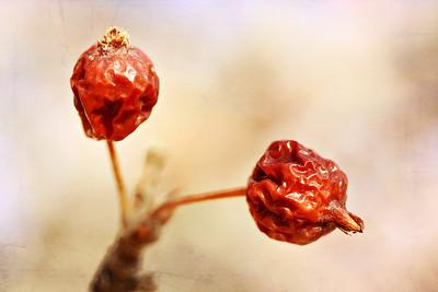Wrinkled Berries
