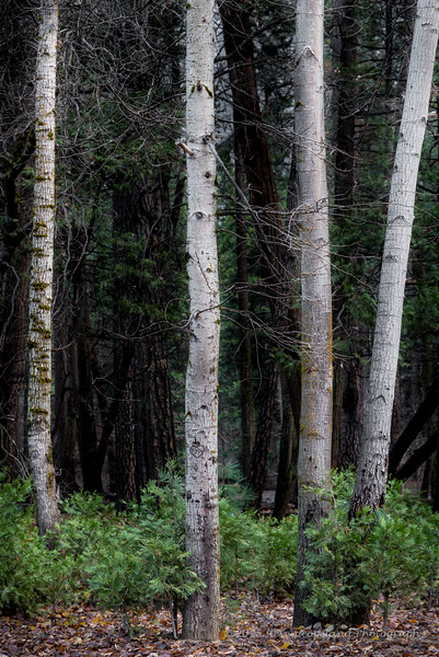 2014-12-10-Yosemite-0015-2
