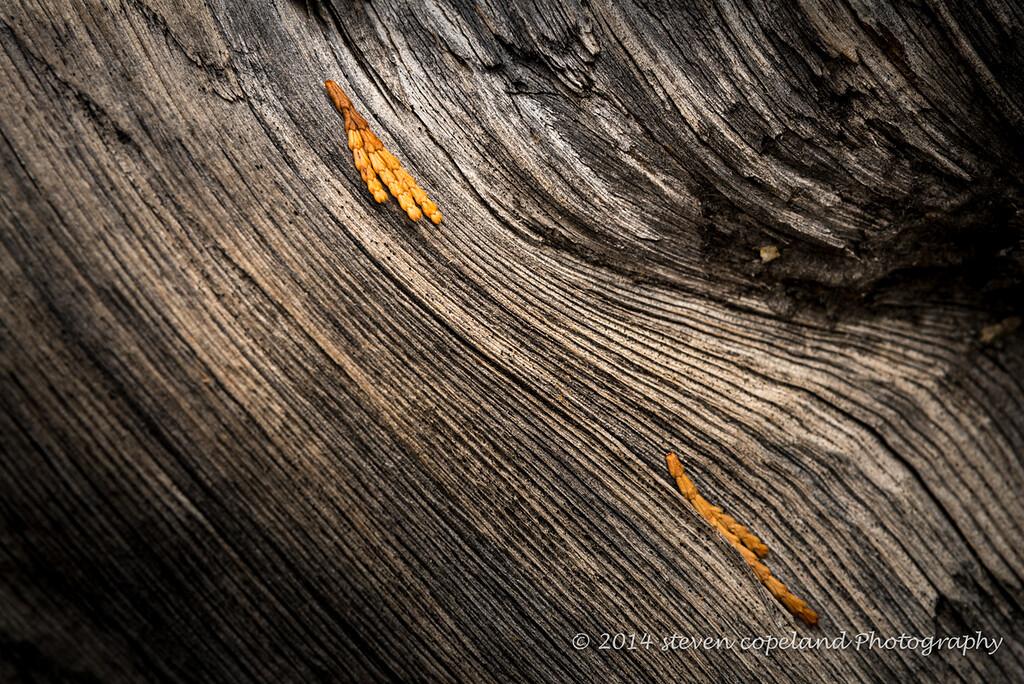 2014-12-09-Yosemite-0010