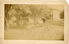 A Family Farm Somewhere in the USA Late 1800s - Early 1900s
