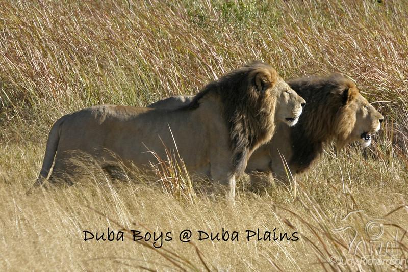 Duba Boys Watching Pride