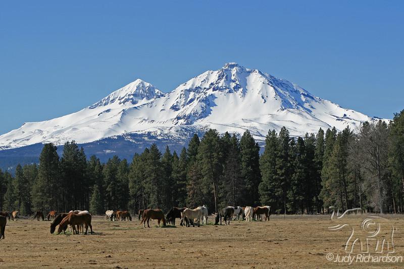 2 Sisters & Horses ~ Sisters, Oregon