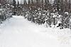 """Snowball Lane"" ~ Beautiful winter scene in Fairbanks, Alaska"