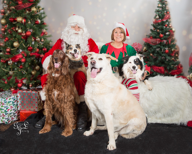 Miss Winkles Pet Photos With Santa 2017