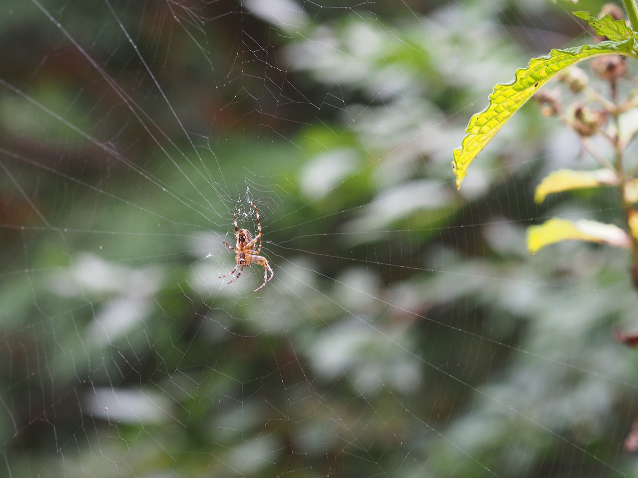 2013 29 Sept Spiders 8