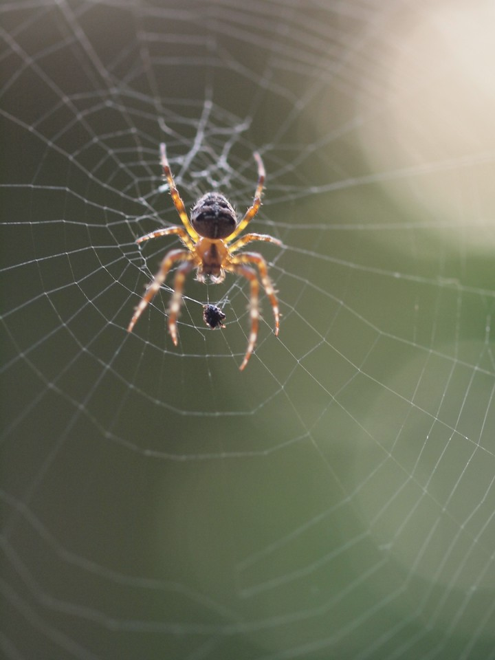 2013 29 Sept Spiders 188