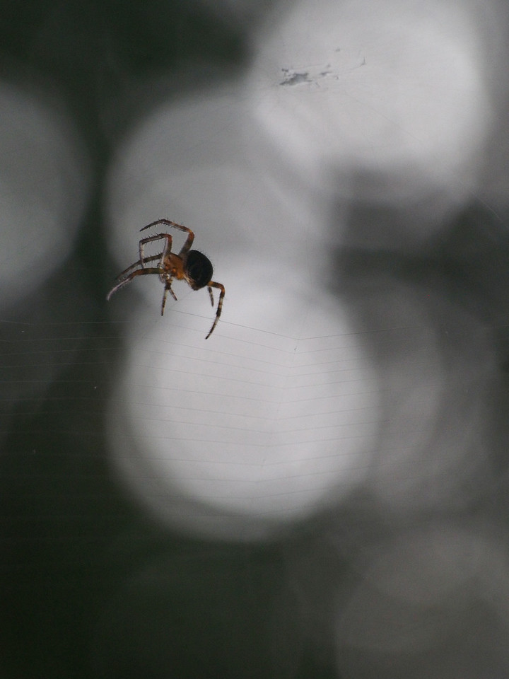 2013 29 Sept Spiders 310