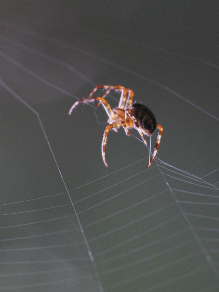 2013 29 Sept Spiders 377
