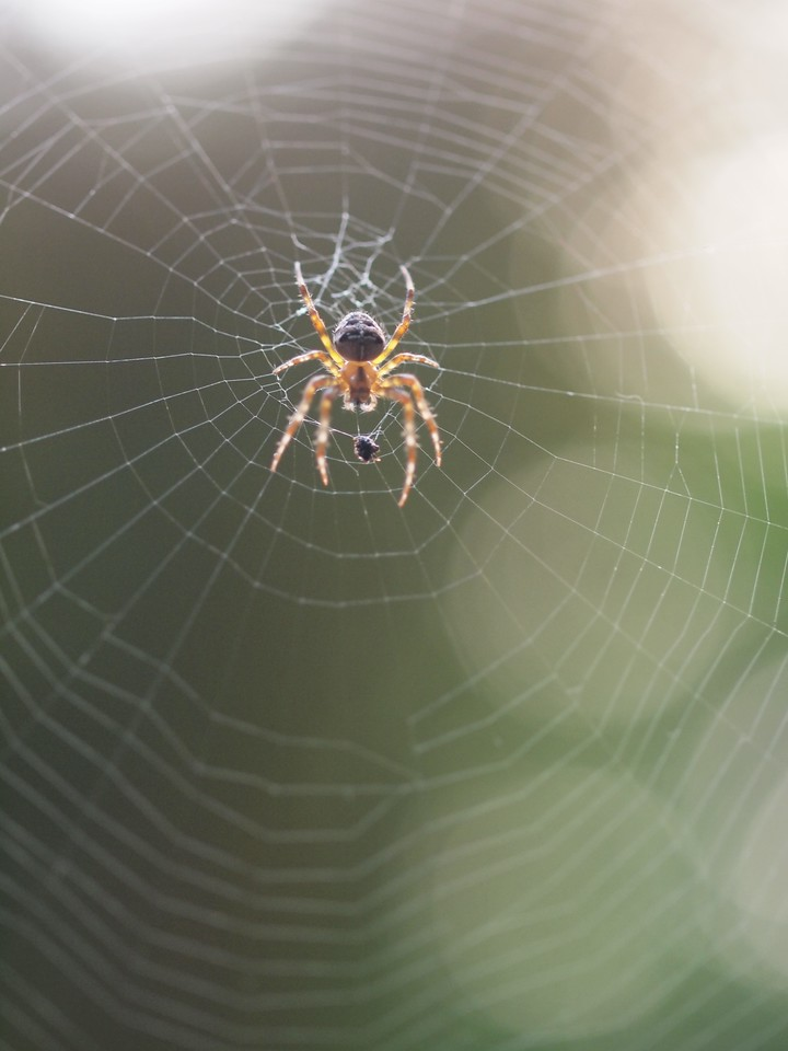 2013 29 Sept Spiders 187