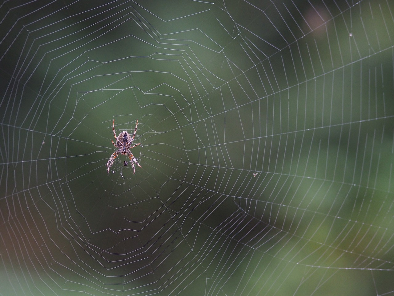 2013 29 Sept Spiders TOO 21