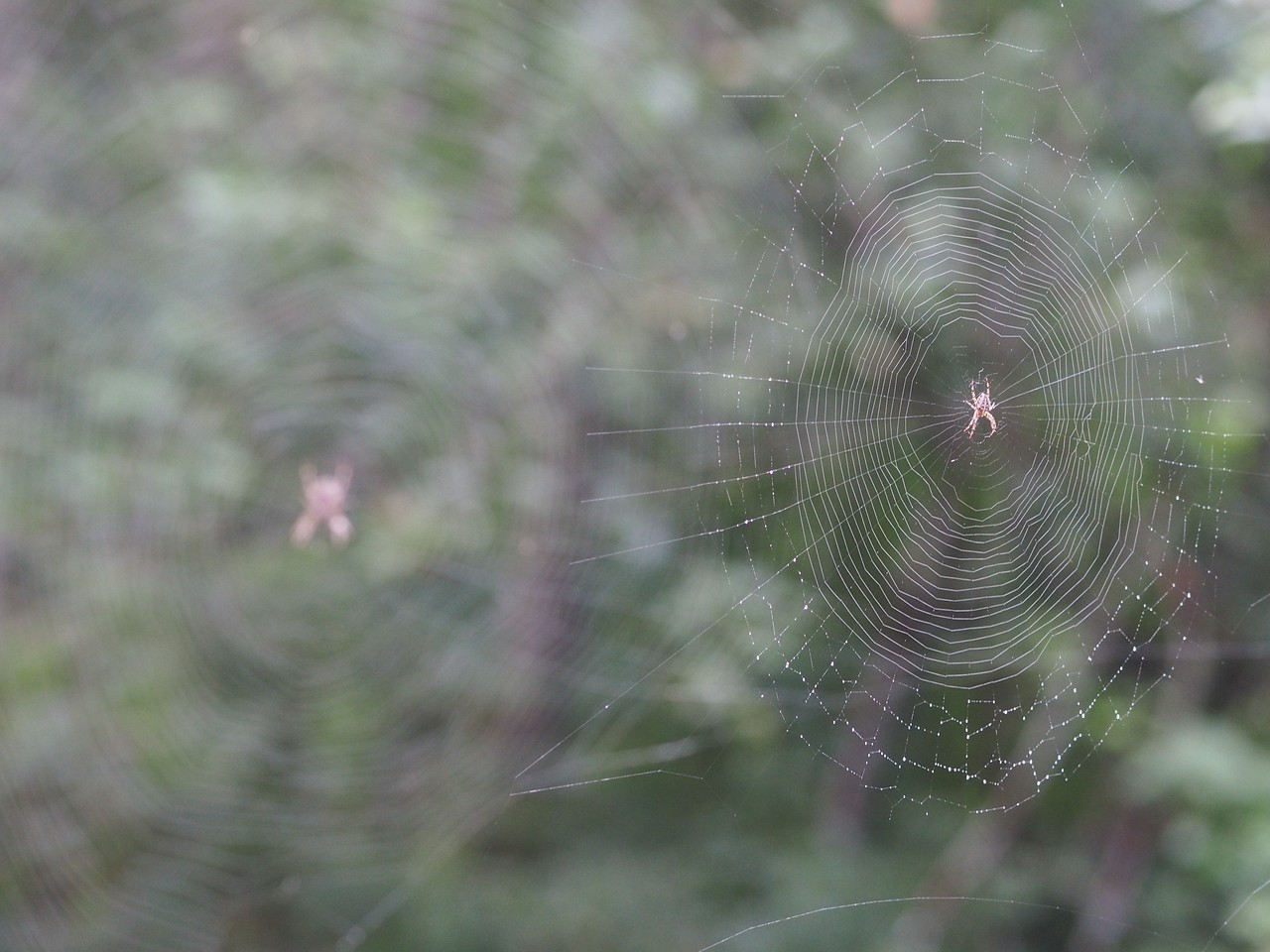 2013 29 Sept Spiders TOO 38