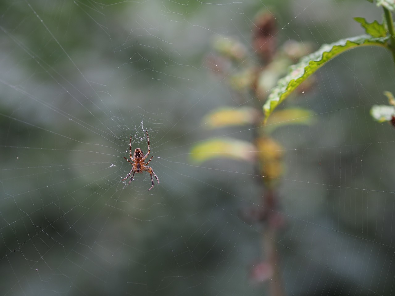 2013 29 Sept Spiders 4