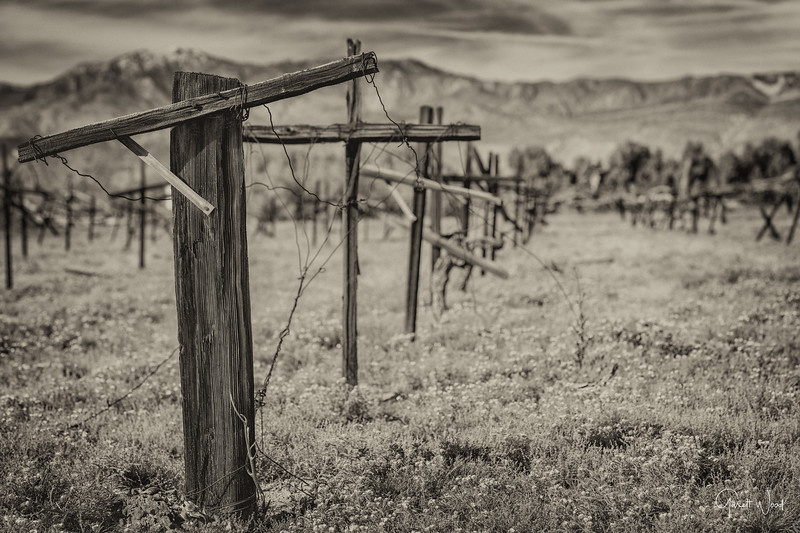 Old empty vineyard with mountains in background