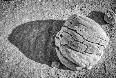 Concretion boulder rocks in desert Anza Borrego State Park