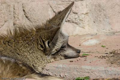 20070601-Denver Zoo-033
