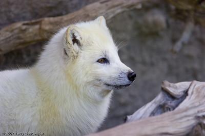 20070601-Denver Zoo-019