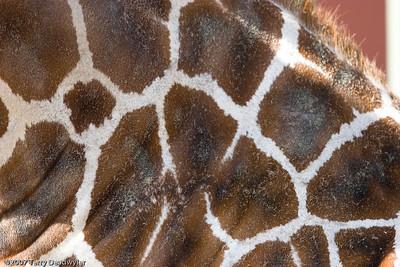20070601-Denver Zoo-010