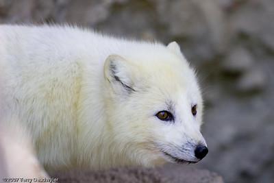 20070601-Denver Zoo-016