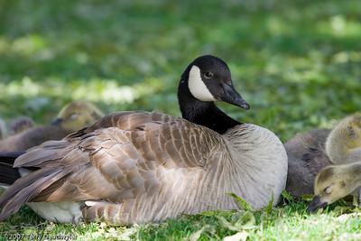 20070601-Denver Zoo-021