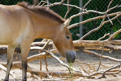 20070601-Denver Zoo-034