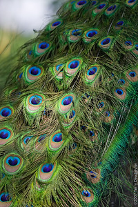 20070601-Denver Zoo-012