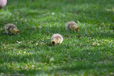 20070601-Denver Zoo-025